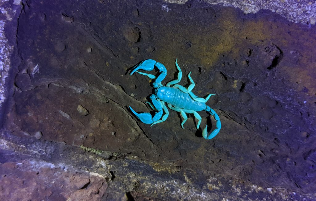 2019 Retrospective: Sheerness Scorpions